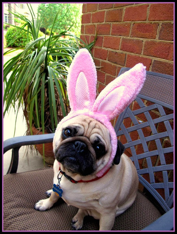 dogs wearing Easter bunny ears