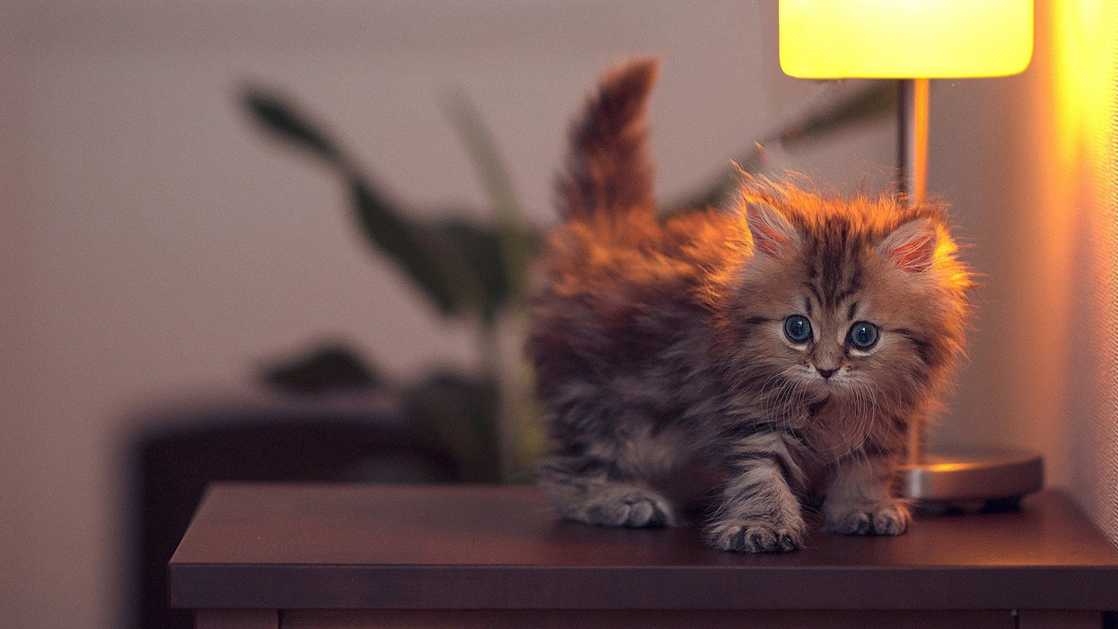 Kitten On Desk