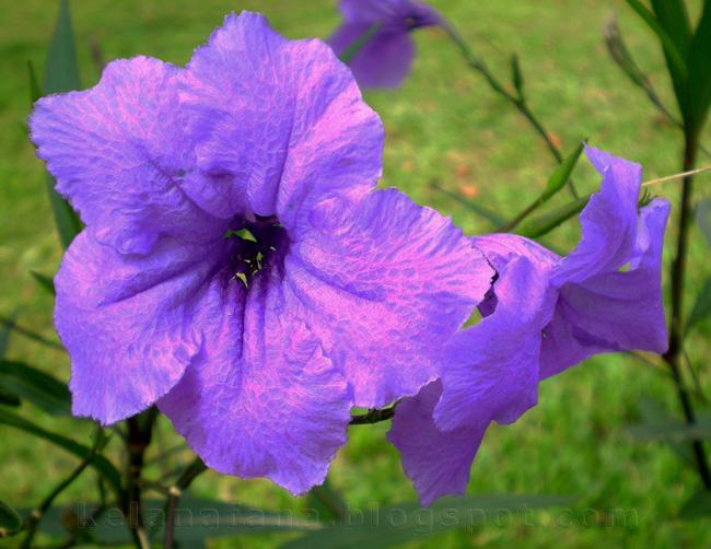 Bunga - bunga di malaysia