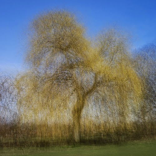 Willow, North Walls Park © Graham Dew 2015