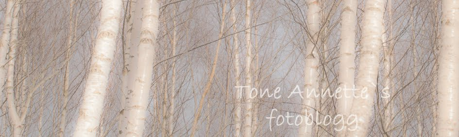 Tone Annette`s fotoblogg
