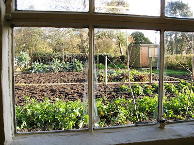View of a vegetable patch from my office window