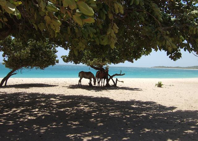 حقائق مذهلة: 25 صورة من أروع الشواطئ في العالم !