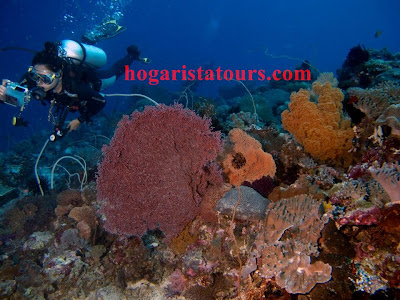 """<img src=""""spot diving in wakatobi.jpg"""" alt=""""the beautifull spot when diving in wakatobi"""">"""