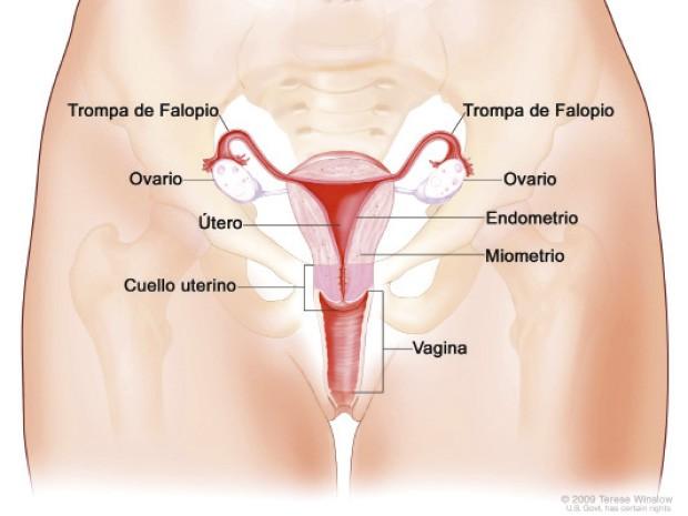Hablando de Sexo. : Anatomía Sexual.