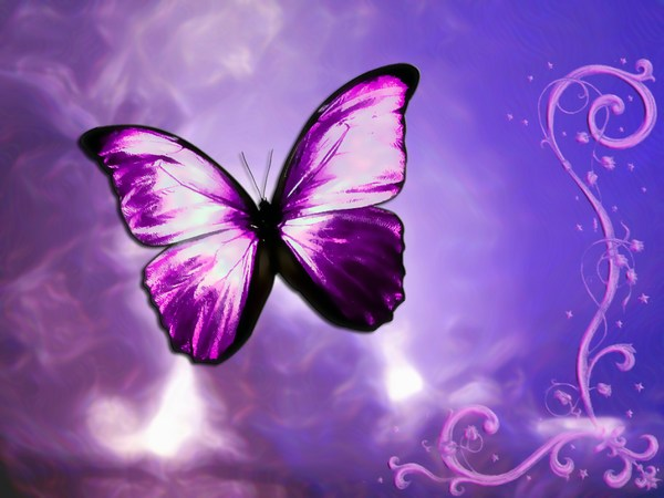 Beautiful Butterfly Images for iPhone