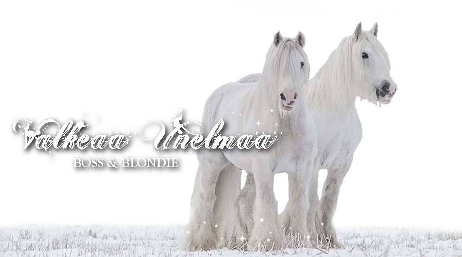 Valkeaa unelmaa - Boss & Blondie