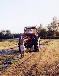 Kelly planting