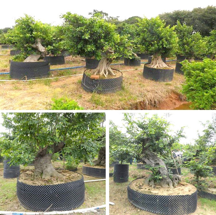 Air Pruning Pots At A Chinese Bonsai Nursery