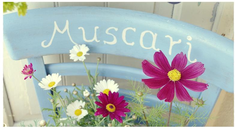 Muscari