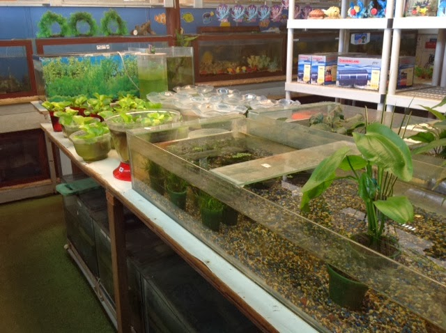 Rogers 39 family pet shop for Waimanalo feed supply