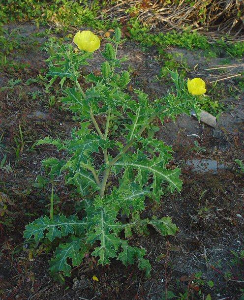 VIVENCIAS LLANERAS DEL ABUELO: La Flora del Bajo Apure en