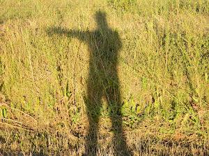 La sombra de recibirte