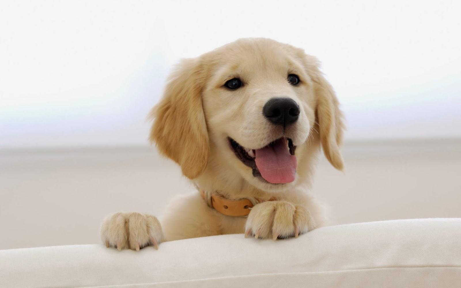 """<img src=""""http://2.bp.blogspot.com/-sS8vXu6LO50/Uue72L7oqvI/AAAAAAAAKhE/gBq6_Cdkssc/s1600/puppy-wallpaper.jpg"""" alt=""""puppy wallpaper"""" />"""