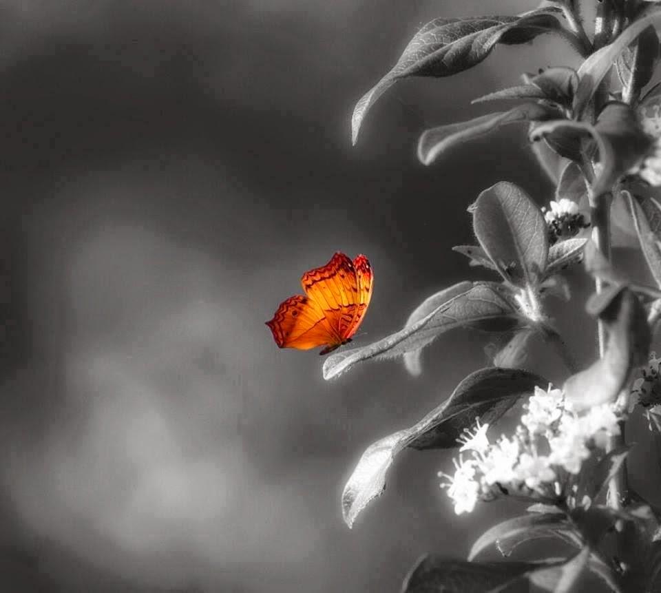 Ser como la mariposa...