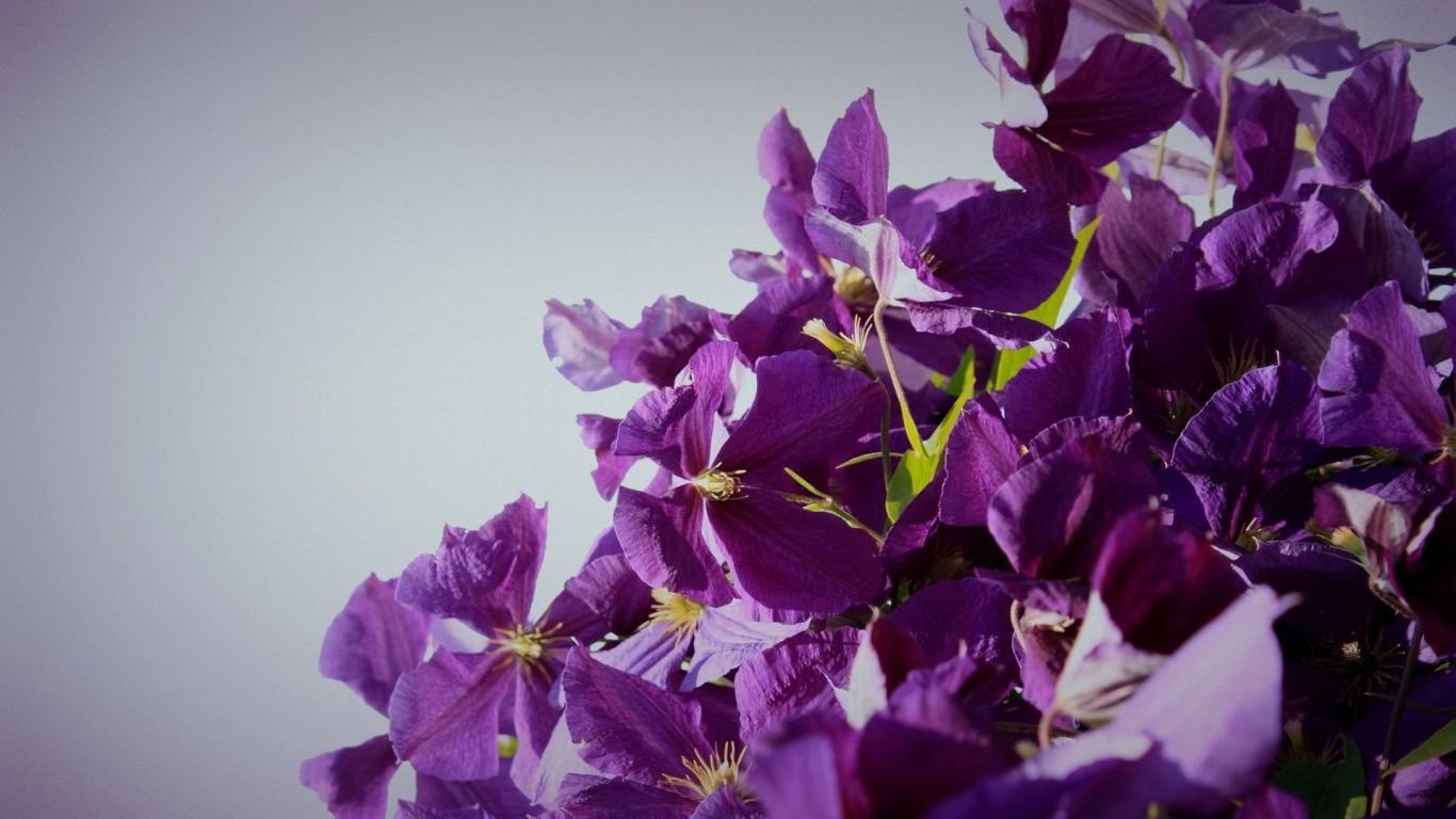 desktop widescreen wallpapers blooming flowers picfish