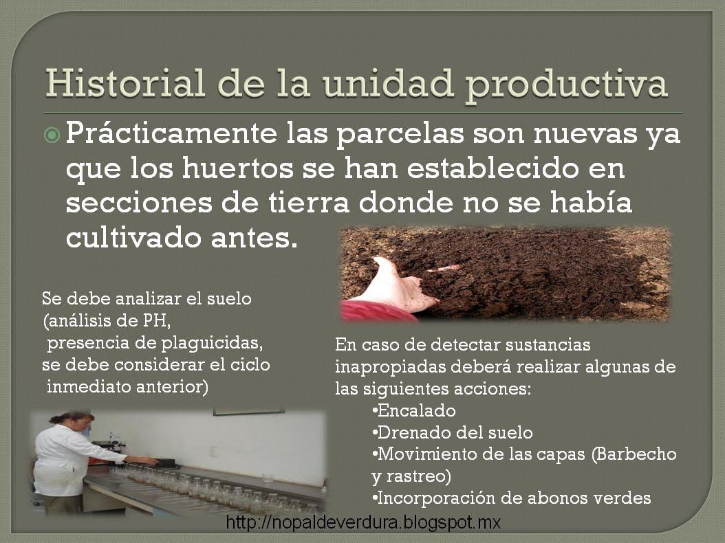 http://nopaldeverdura.blogspot.mx