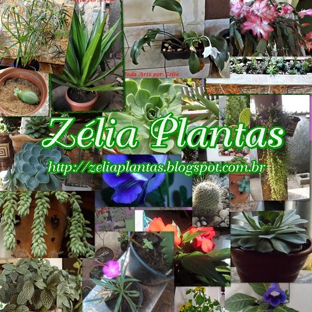 imagem zelia plantas
