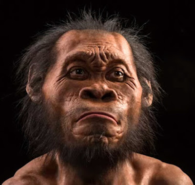 Cientistas anunciam descoberta de novo primo distante do homem