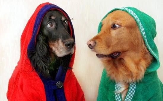Guamod scuola la storia dei due cani buddha educare for Testo il cielo nella stanza