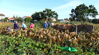 Conjunto de pessoas na lavoura a descamisar o milho