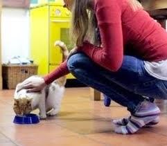 Fazendo a transição do seu gato para Alimentação Natural - Parte 1