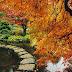 Nature hd photos