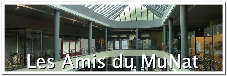 Blog des Amis du Muséum régional des Sciences naturelles (MuNat) à Mons