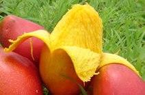 Foto de Mango pelado