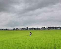 Under a cloudy sky, Akira Sudo is seen amidst his rice paddies in Tome, Miyagi Prefecture, on Aug. 3. (Mainichi)