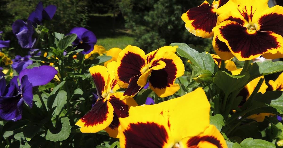 Le foto di paolo fiori di montagna co for Immagini astratte per desktop