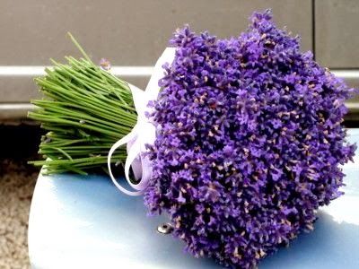 LAVANDA/ALFAZEMA