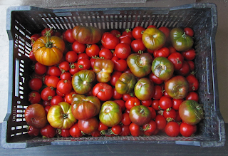 Large Farmer's Bin of Heirloom and Early Girl Tomatoes