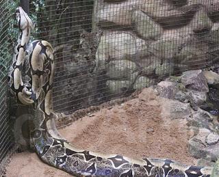 8 curiosidades que você não sabia sobre as cobras