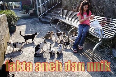 populasi kucing semakin bertambah pesat.