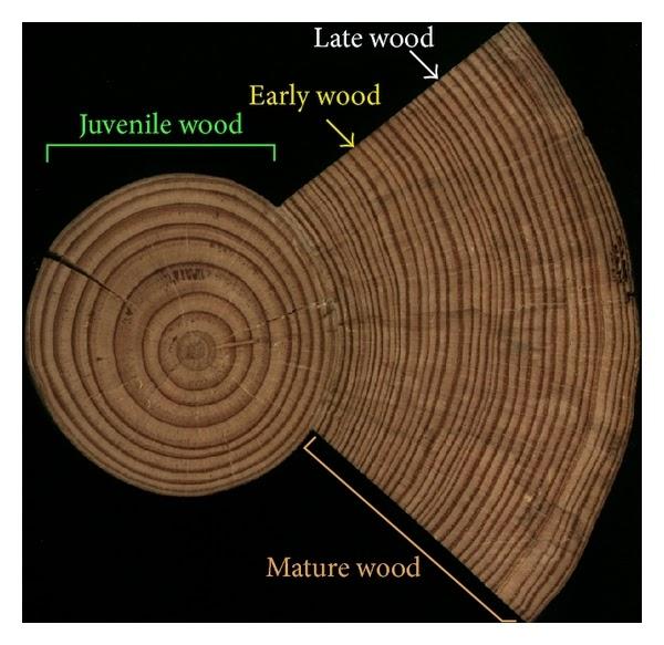gỗ non