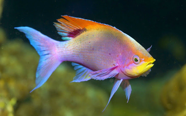 18892-Beautiful Fish Animal HD Wallpaperz