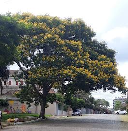 Árvores da cidade