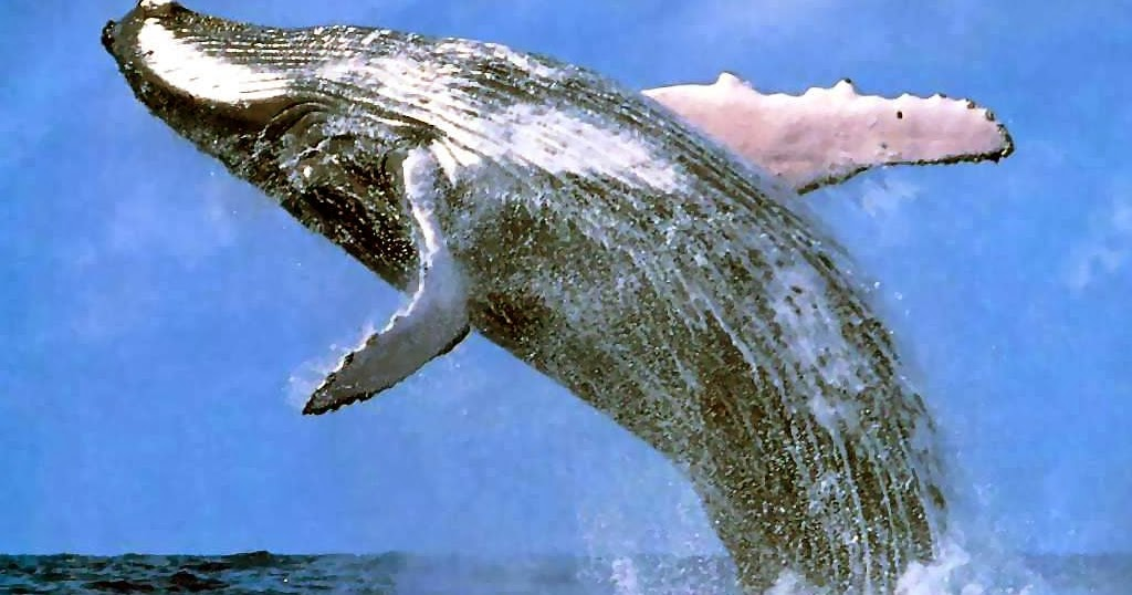 Satwa Laut yang Dilindungi Berdasarkan Peraturan