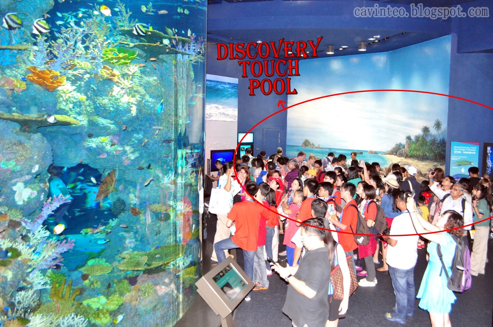 Entree Kibbles Discovery Touch Pool S E A Aquarium Resort World Sentosa Singapore