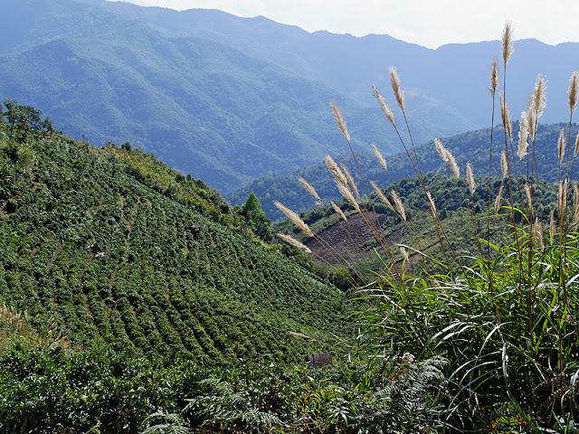Ngắm vẻ đẹp hoang sơ của Phongsaly