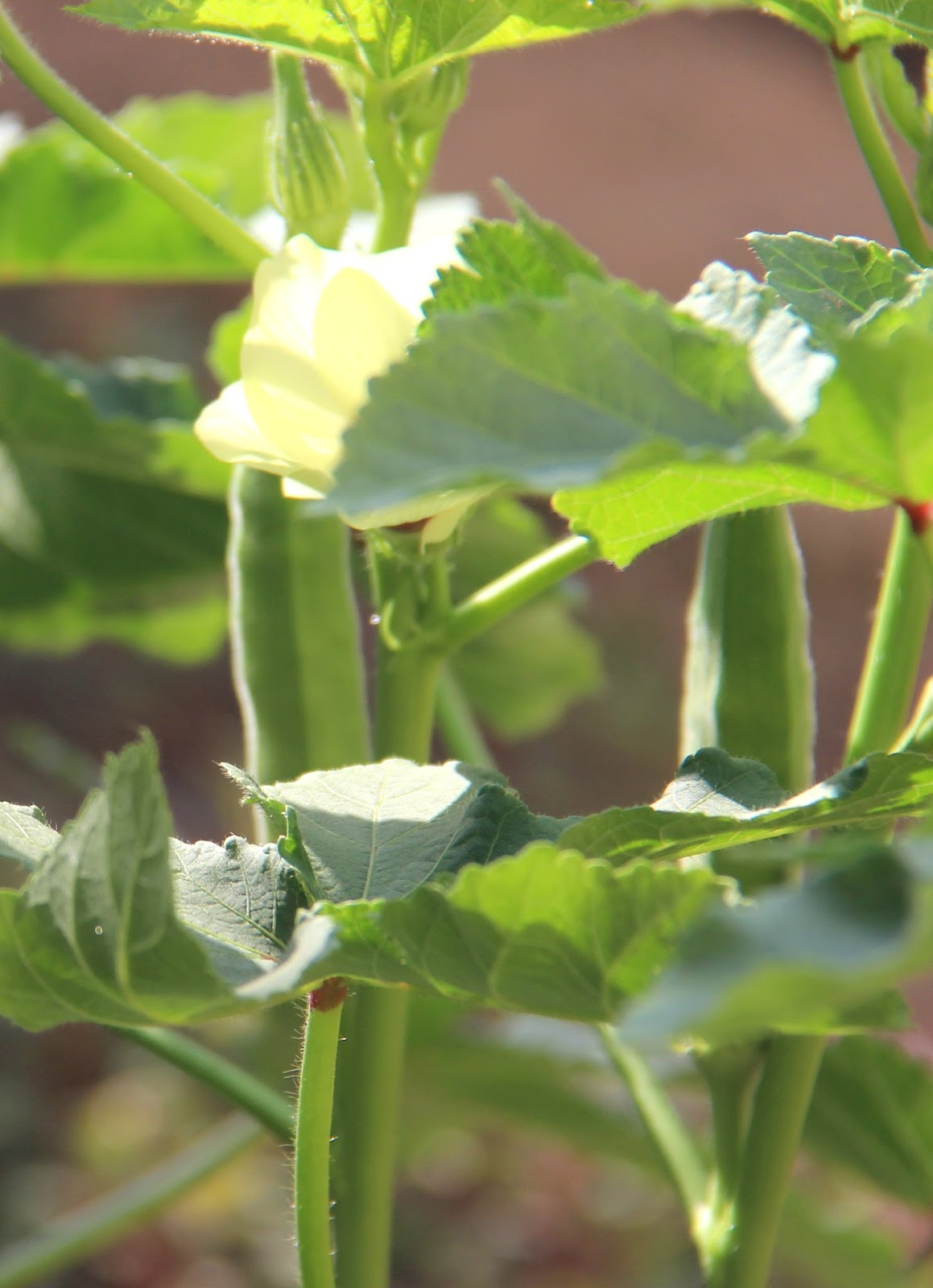 Tickled by Inspirations...: My Edible Garden