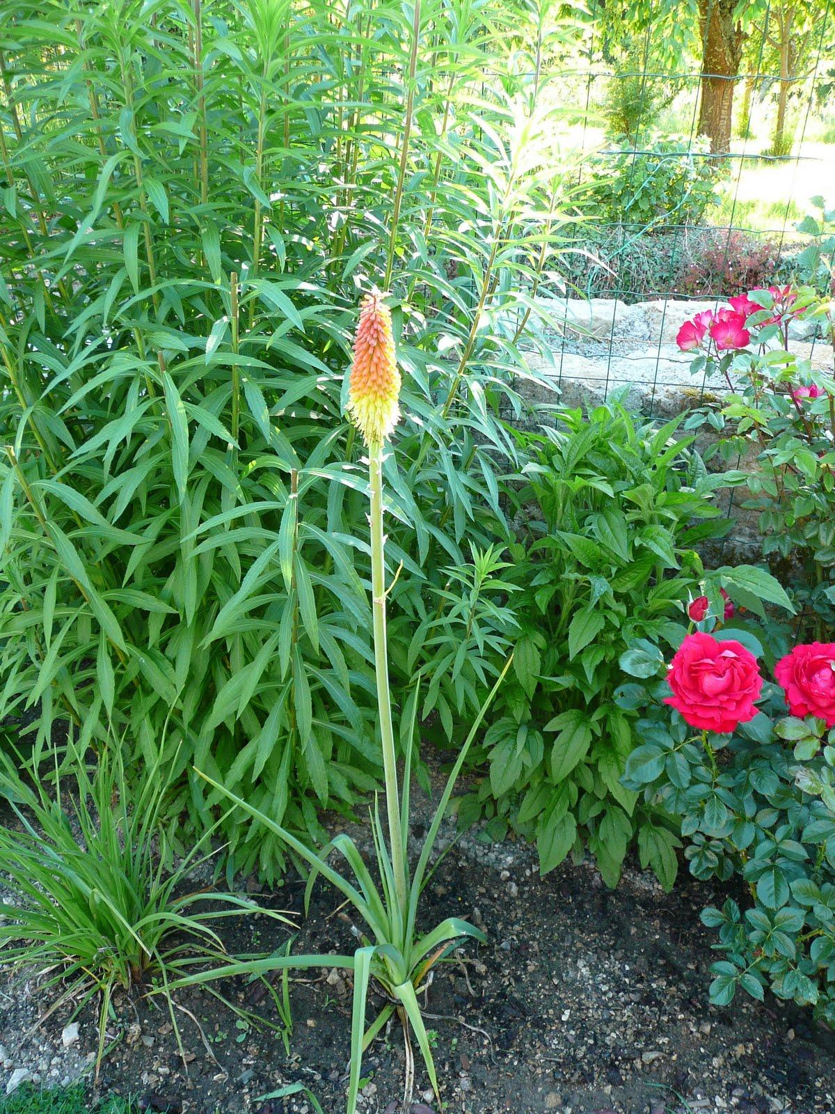 Notre jardin secret Tison de satan et valériane