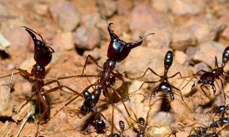 ant foraging essay