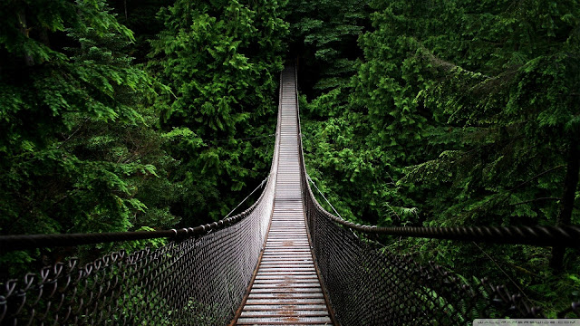 Best Jungle Life wooden bridge, jungle, wallpapers