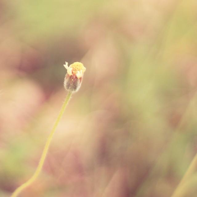 tiny flower by Julienne Mumar