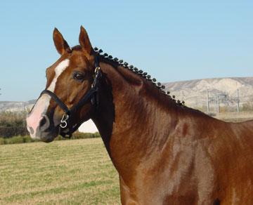 A caballo - Caballo silla frances ...