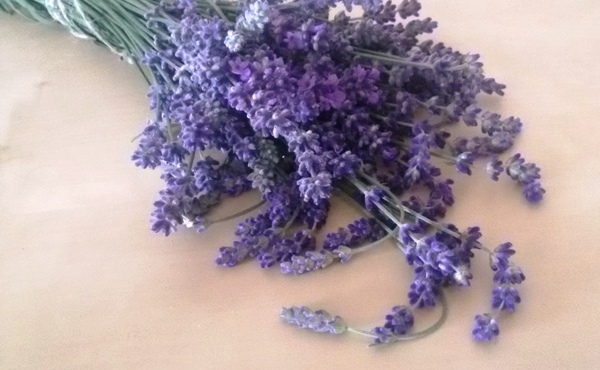 Lavendel & Co