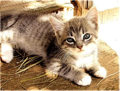 imágenes tiernos de gatitos
