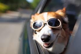 Viajar con perros y gatos en el auto lo que diria Cesar Millan